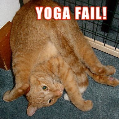Yoga cat fail