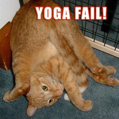Yoga cat fail