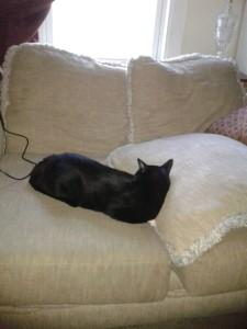 Tuxedo Cat Napping