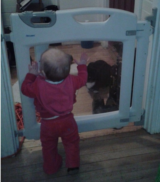 """Her constant banging on the gate is basically saying: """"Please come play with me, kitty!"""" Please!"""""""