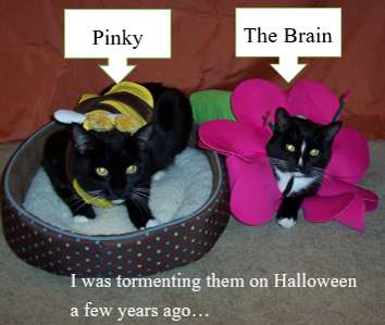 Cats pinky and brain